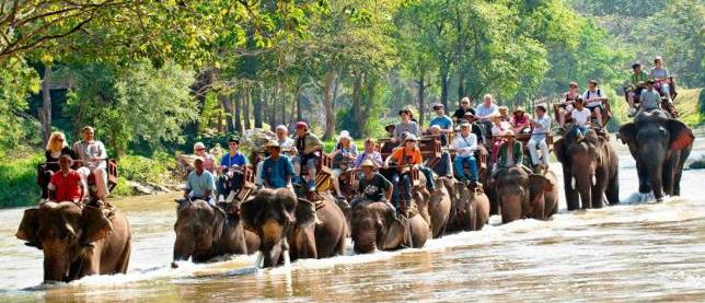 Отдых в ноябре - Тайланд, шоу слонов