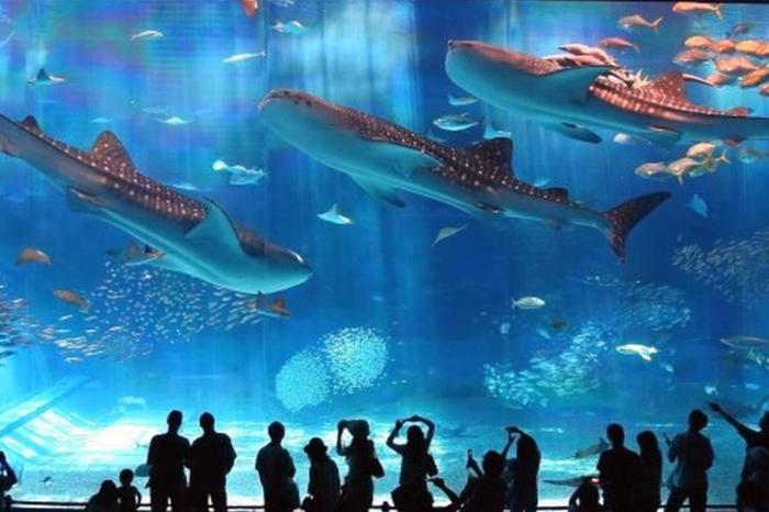 Анталия для детей, Океанариум в Анталии