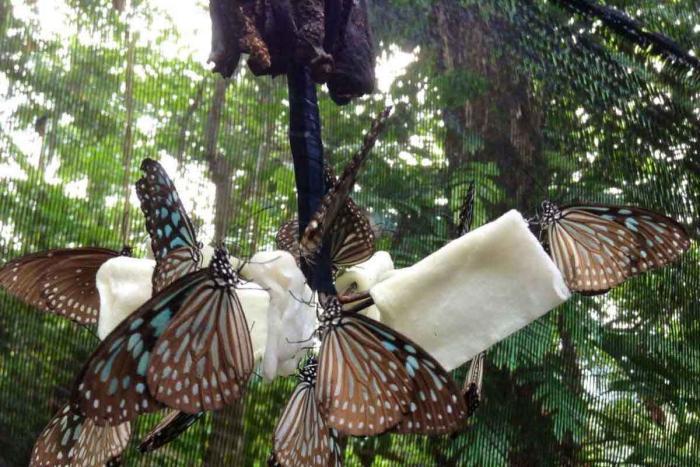 Самуи, Сад бабочек