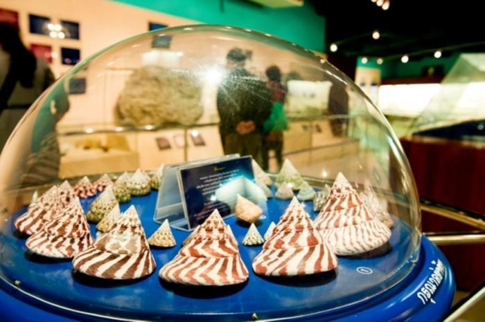 Пхукет, Phuket Seashell Museum