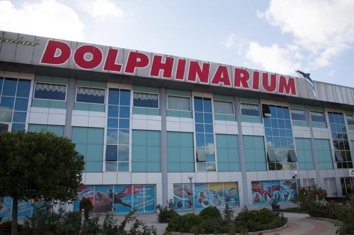 Стамбул для детей, Дельфинарий в Стамбуле