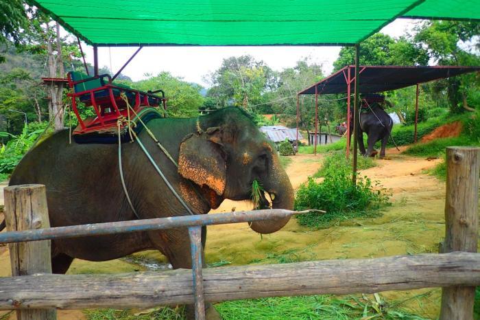 Что посмотреть, Деревня слонов