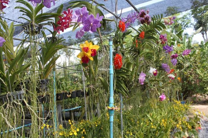 Погода на Пхукете в июне - Сад орхидей