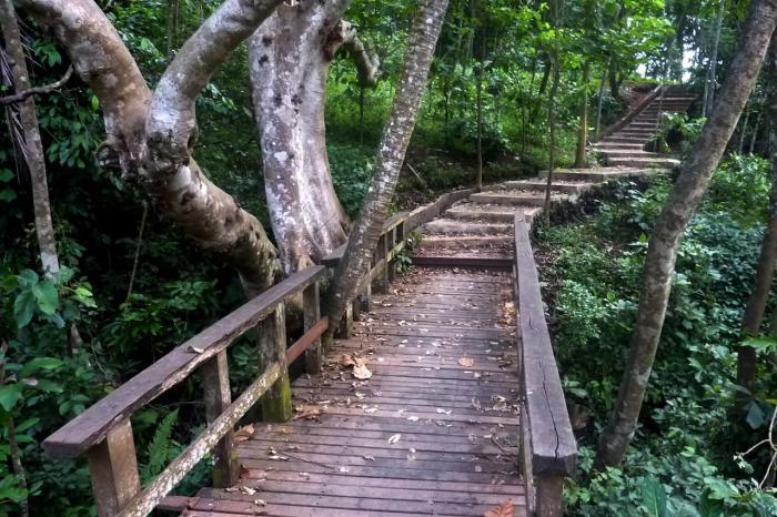 Индонезия, лес обезьян