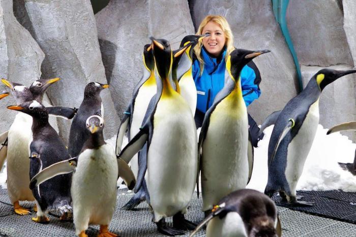 Лазаревское, Посетите шоу дельфинов вместе с детьми