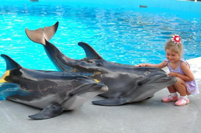 Станица Голубицкая, С детьми можно сходить в дельфинарий