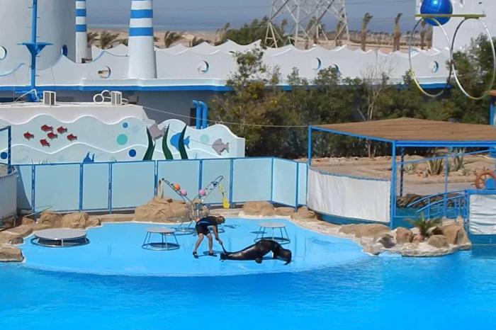 Где лучше отдохнуть с ребенком, Дельфинарий в Хургаде