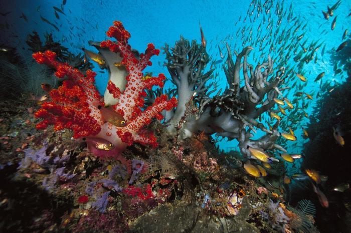Шарм-эль-Шейх, Подводный мир Красного моря