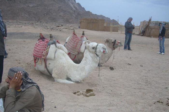 Хургада, В деревне бедуинов