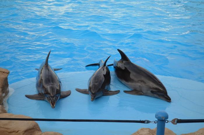 Отдых с детьми, Дельфинарий