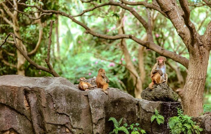 Хайнань, остров обезьян