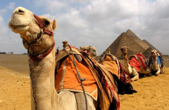 Египет, Экскурсия на верблюдах по пустыне