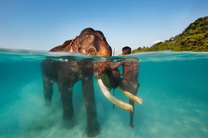 Гоа, Обязательно попробуйте искупаться со слонами
