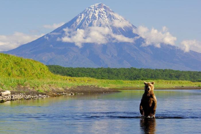 Камчатка, Окунитесь в мир дикой природы
