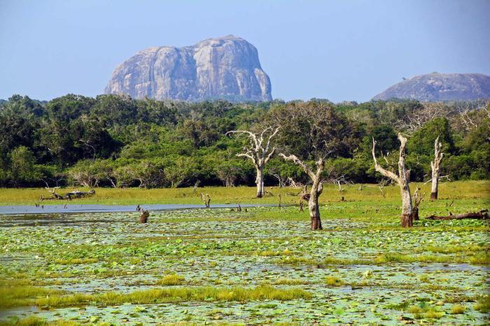 Шри-Ланка, Окунитесь в дикую природу в Национальном парке Кумана