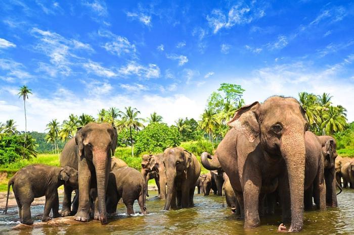 Шри-Ланка, посетите приют для слонов
