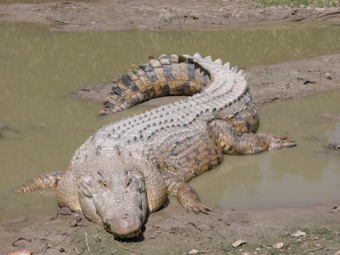 Фантьет, Крокодилий птомник. Дети