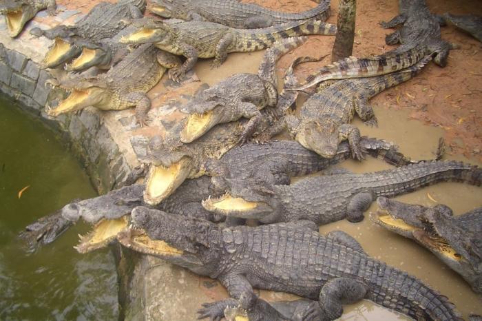 Фантьет, Крокодиловая ферма