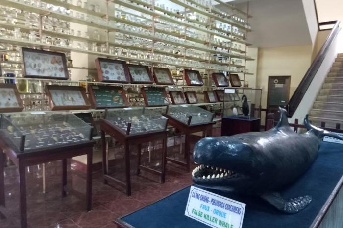 Нячанг, музей Океанографии