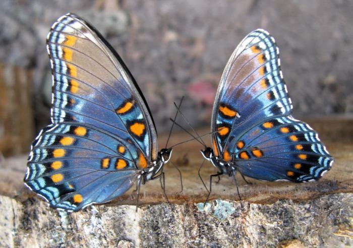 Отдых с детьми на Родосе, Долина бабочек