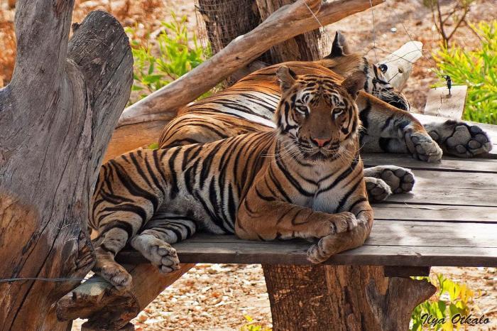 Тунис, Окунитесь в мир дикой природы в зоопарке
