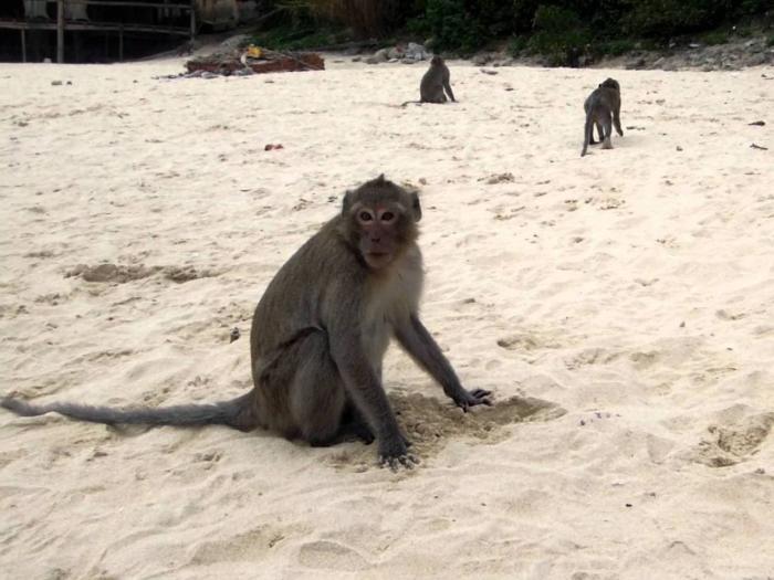 Вьетнам Нячанг Monkey Island