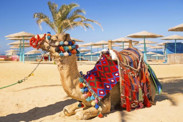 Хургада, Верблюд на пляже Хургады