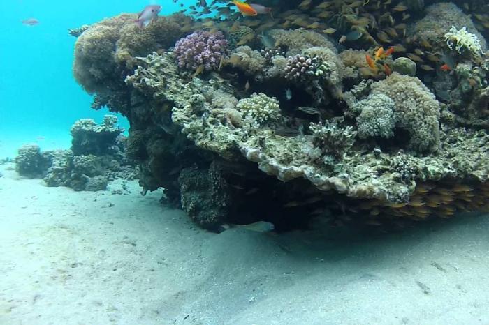 Таба, подводный мир