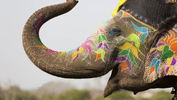 Индия, Прокатитесь на слонах