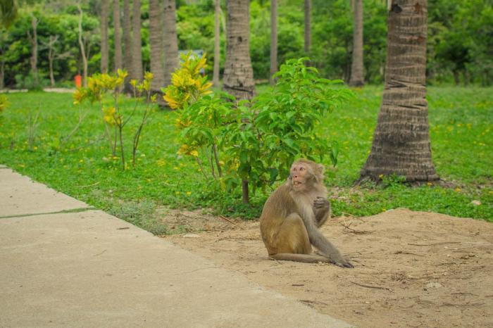 Вьетнам, Посетите Остров обезьян