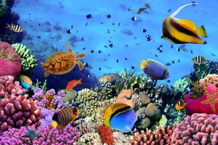 Таба, Подводный мир Табы