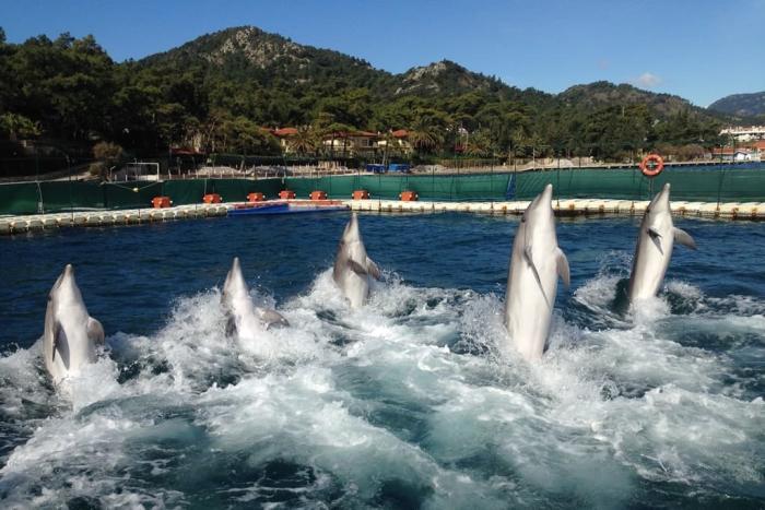отдых с детьми, Мармарис дельфинарий