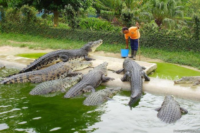Отдых с детьми, Аттракцион крокодилов