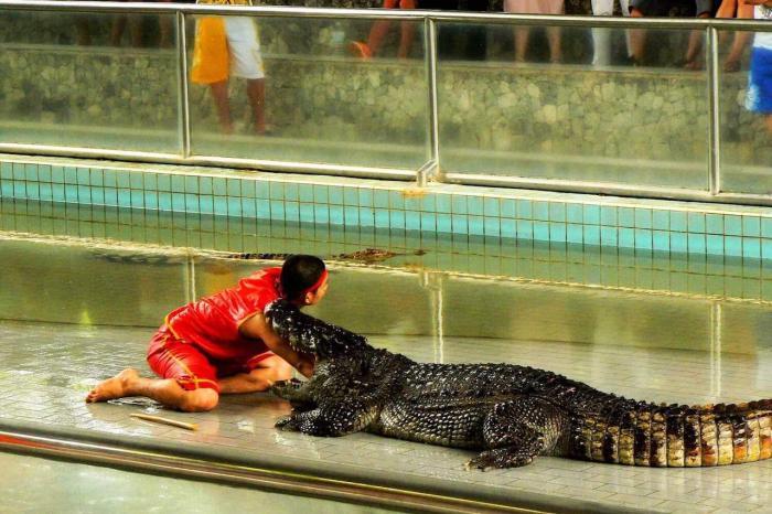 Паттайя, Крокодиловая ферма