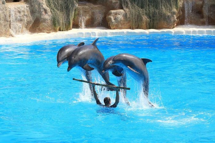 Отдых с детьми в Алании, Дельфинарий «Сиаланья»