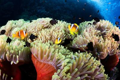 Сафага, Коралловый риф в Сафаге