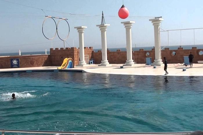 Погода в Аланье в сентябре - Дельфинарий
