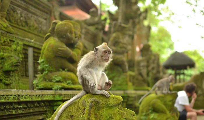 Бали, Лес обезьян в Убуде