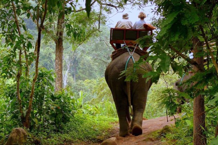 Гоа, поездка в джунгли